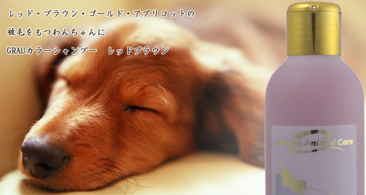 レッド・ブラウン・ゴールド・アプリコットの被毛をもつ成犬・成猫