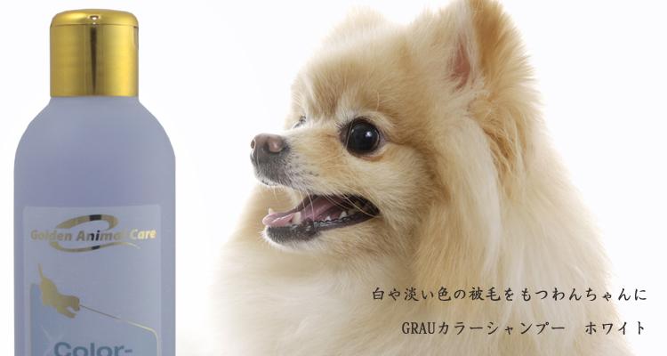 白い被毛・淡い毛色の被毛をもつ成犬・成猫
